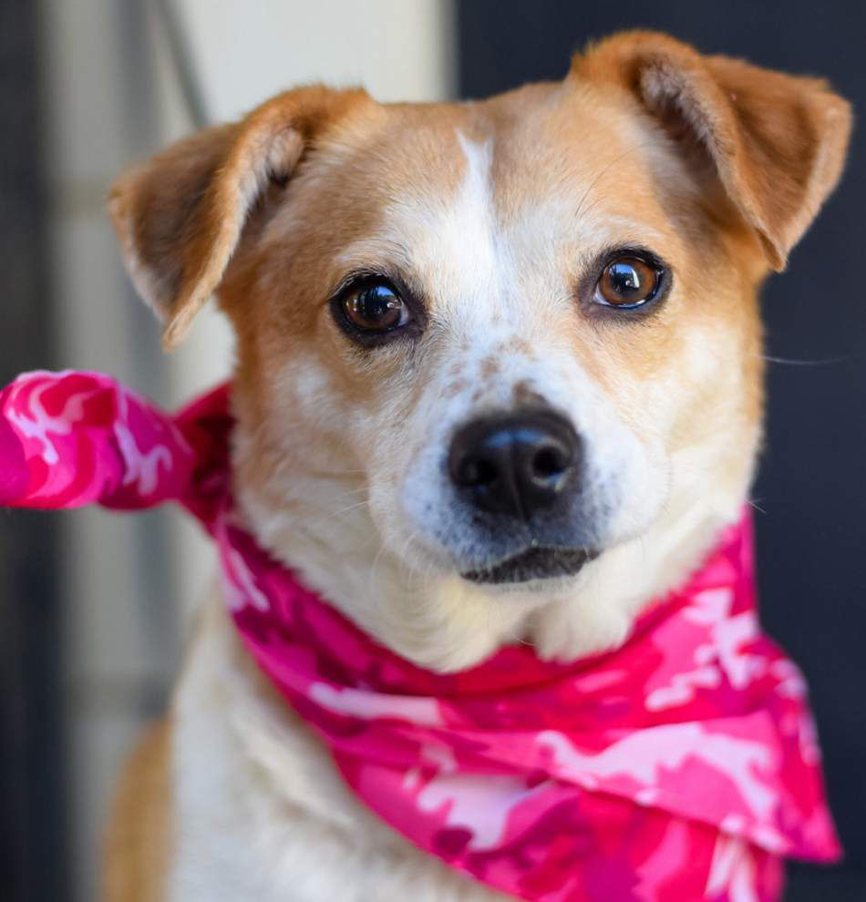 Mid City dogs available for Feb. 18, 2016 _lowres