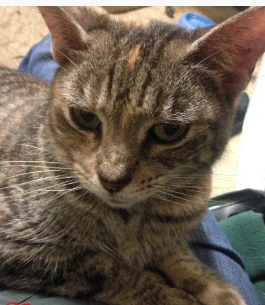 Southside cats available for Feb. 19, 2015 _lowres
