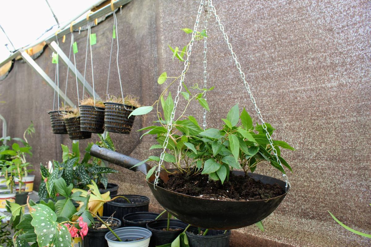 Hanging Wok Planter.jpg