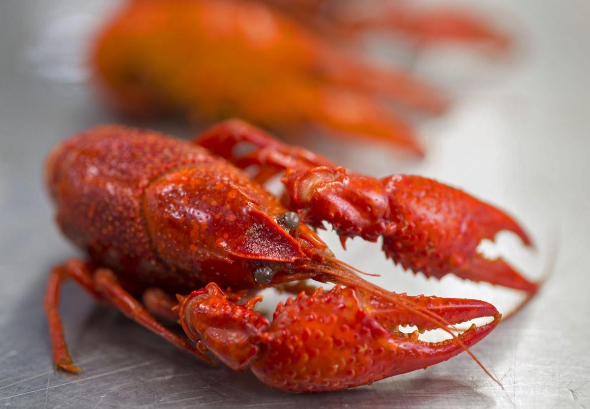 BR.crawfish223.011918.jpg
