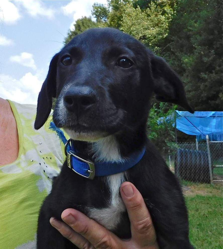 West Feliciana Parish pets available Nov. 12, 2015 _lowres