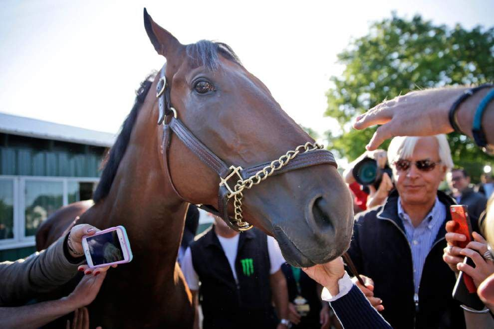 After a brief rest, Triple Crown champion American Pharoah will be racing again _lowres