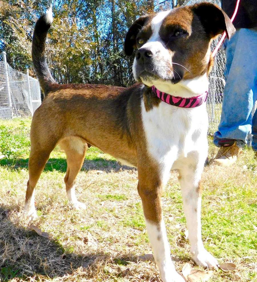 West Feliciana pets for Feb. 11, 2016 _lowres