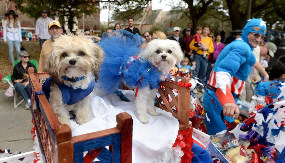 Photos: Mutts parade _lowres