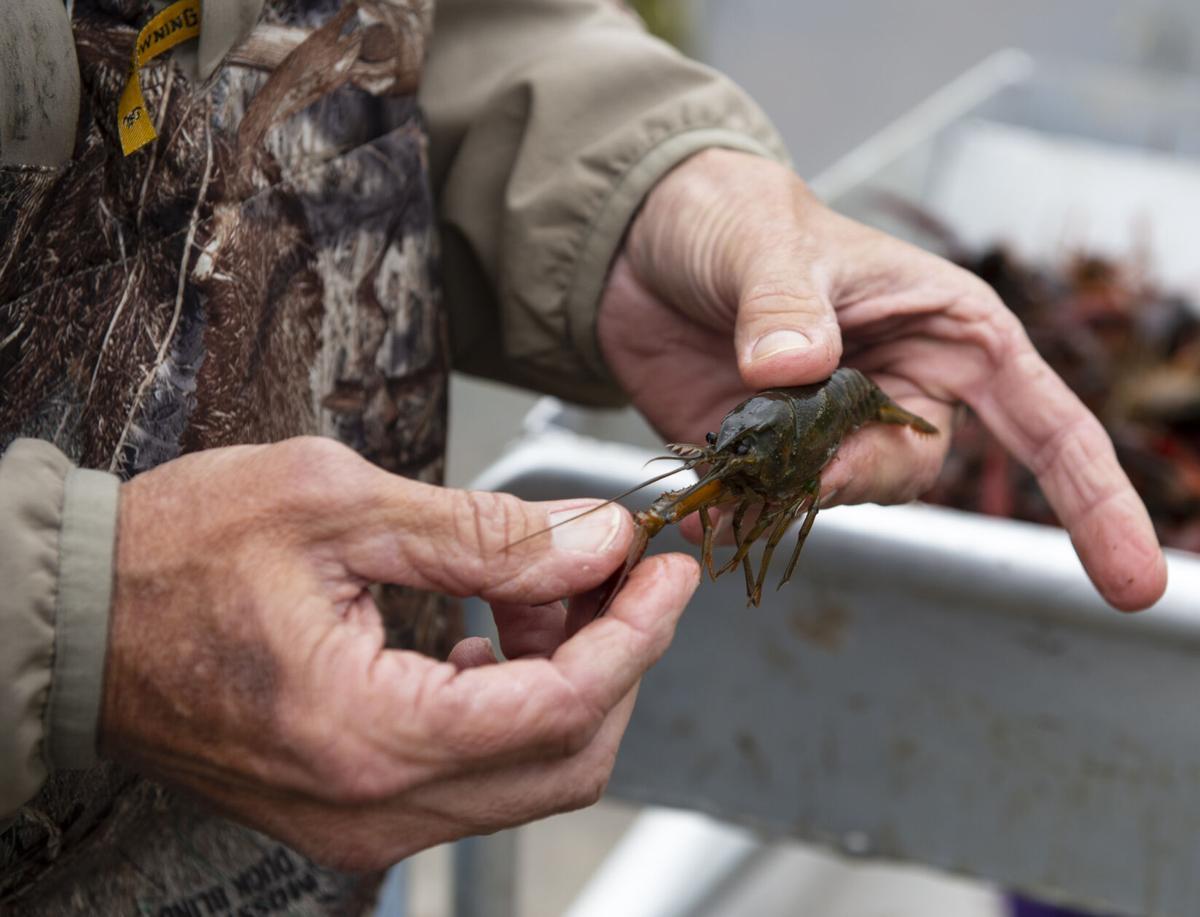 ACA.crawfishharvest003.010721.jpg