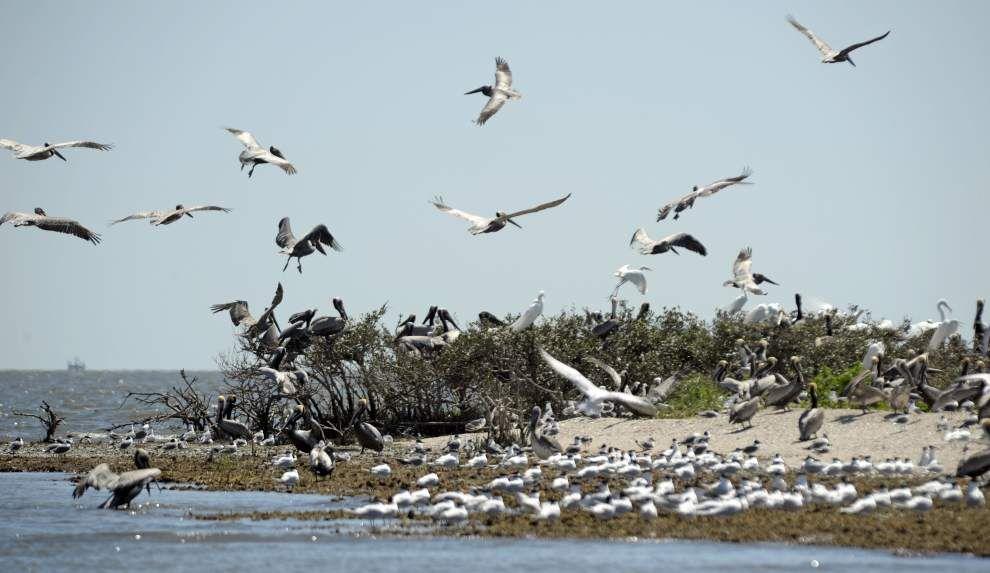Business coalition to push coastal La. restoration efforts _lowres
