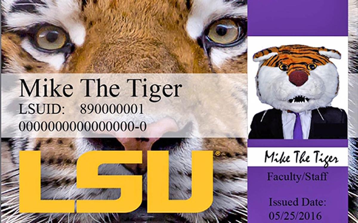 New LSU student ID cards serve as ticket to voting booth ...