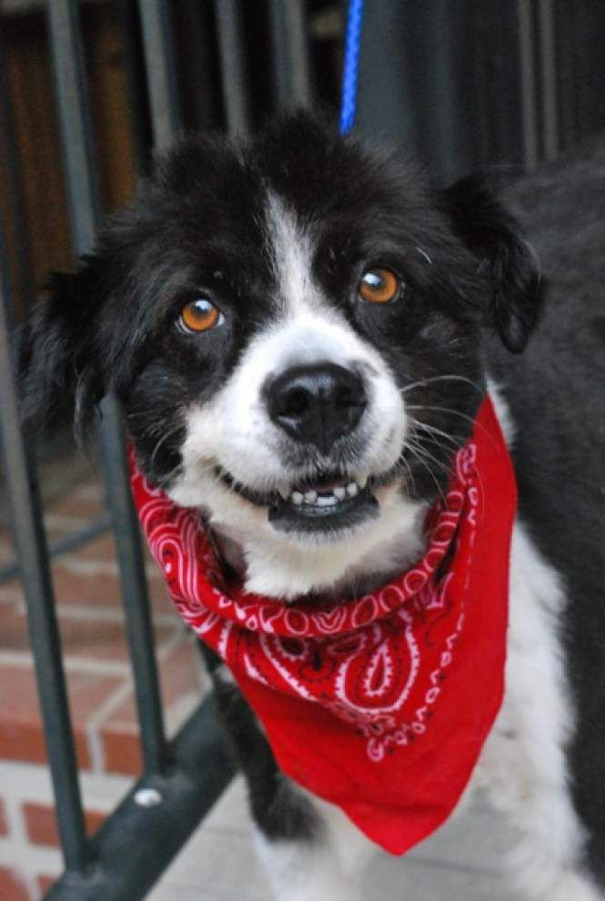 Southside pets available for Sept. 4, 2014 _lowres