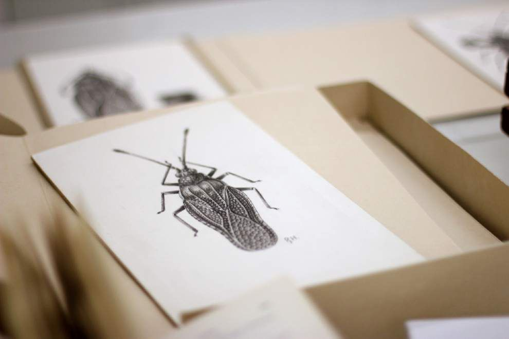 Smithsonian asks judge's help with bug collection _lowres