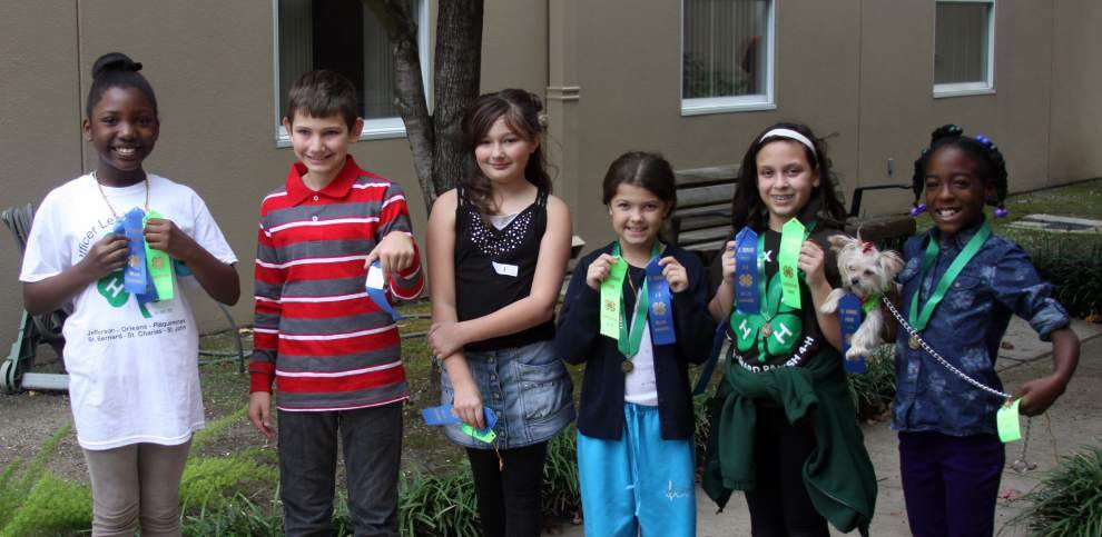 4-H members compete in pet show _lowres