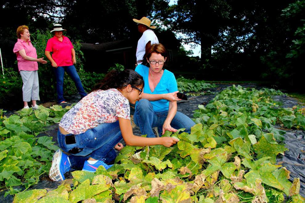 Southern, SARE program host tour of farms _lowres