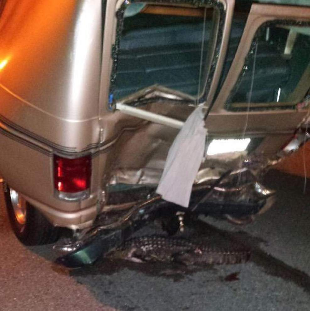 New Orleans Police Department says alligator to blame for fatal crash on Interstate 10 _lowres