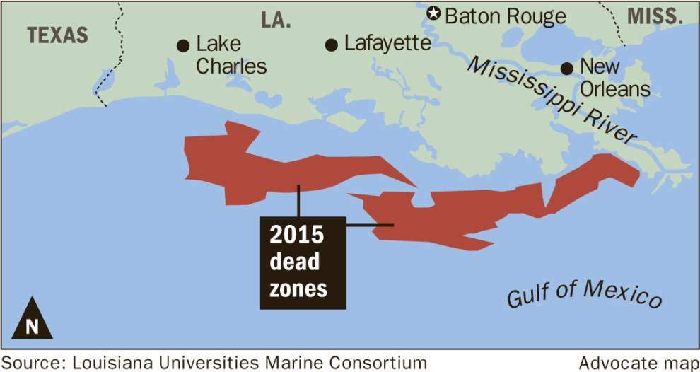 Even with average dead zone forecast in Gulf of Mexico, problems 'huge,' not enough being done, researcher says _lowres