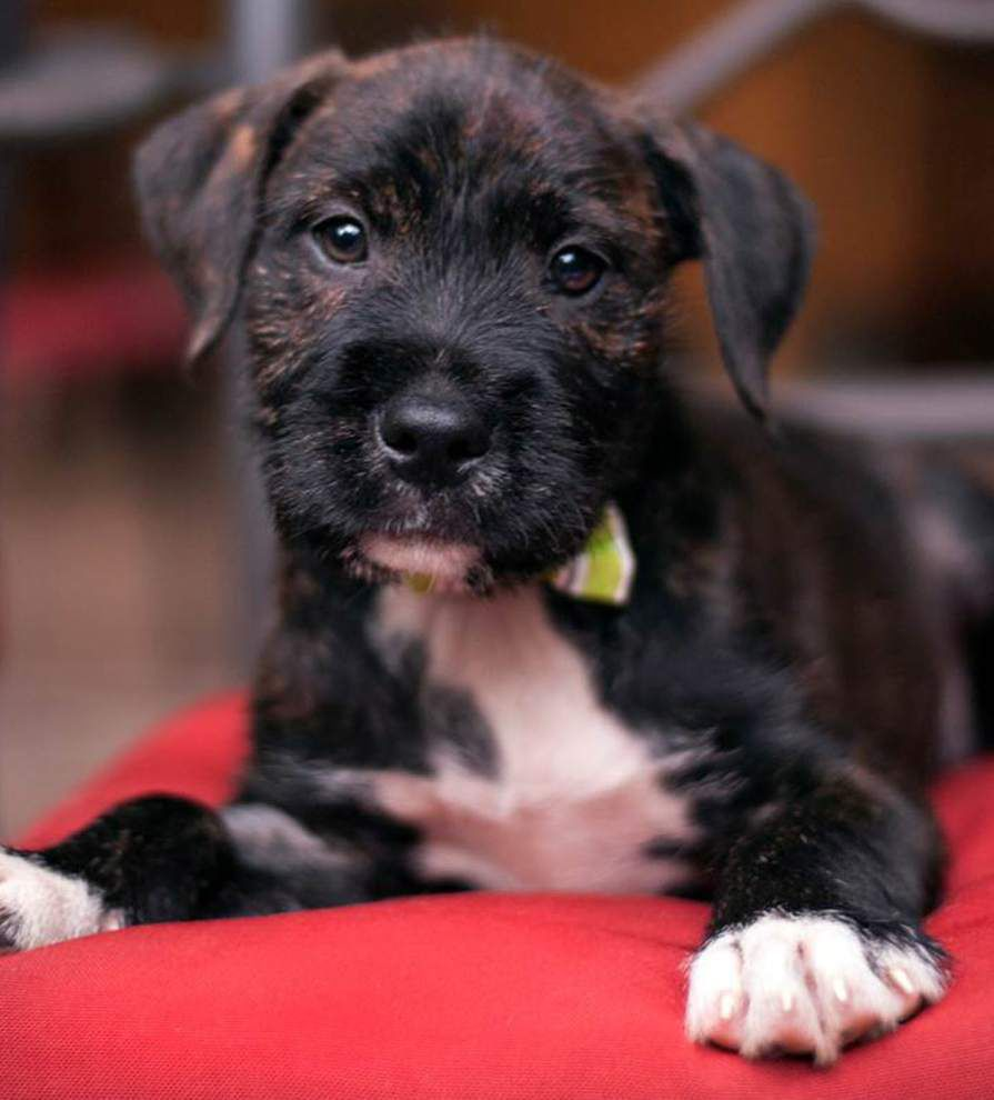 Mid City dogs available for June 18, 2015 _lowres