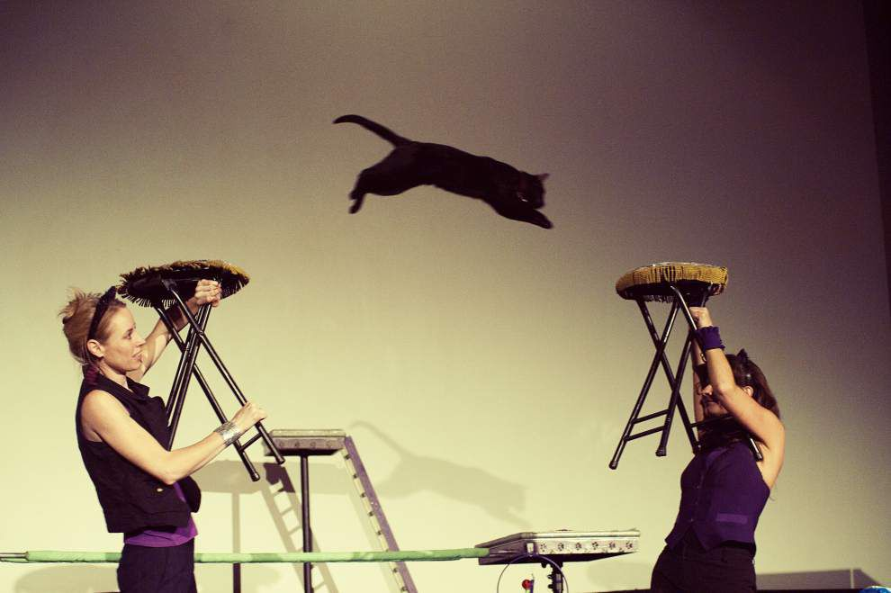 Acro-Cats leap into New Orleans: Cats can be trained, but they are shrewd negotiators. _lowres