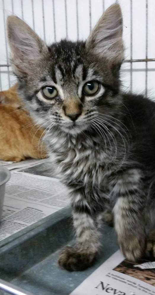 Ascension Parish pets available for Oct. 30, 2014 _lowres