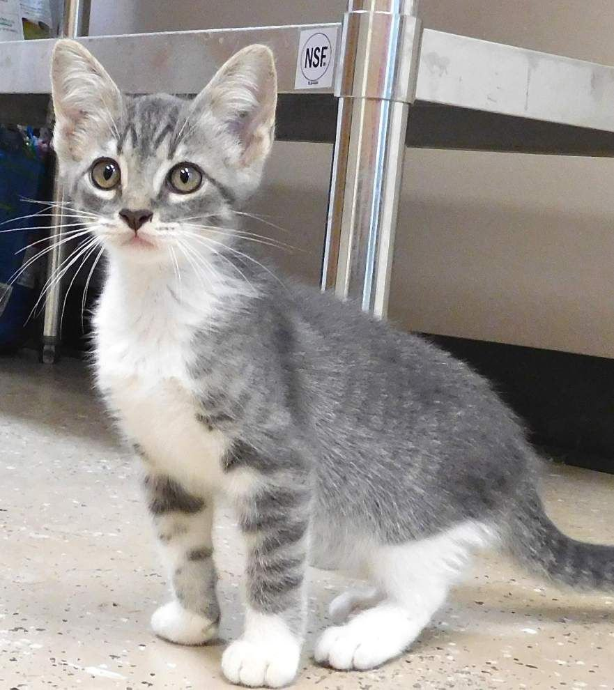 West Feliciana Pets available: Sept. 3, 2015 _lowres