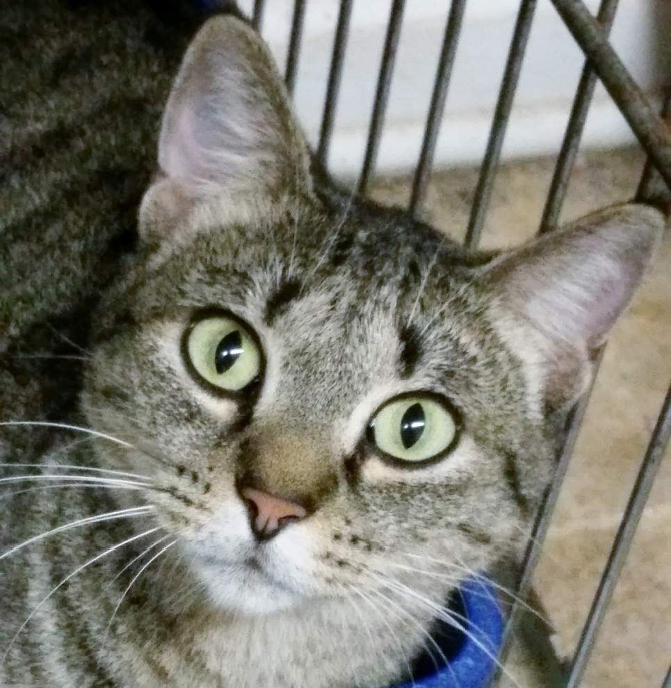 Ascension Parish pets available for Jan. 15, 2015 _lowres