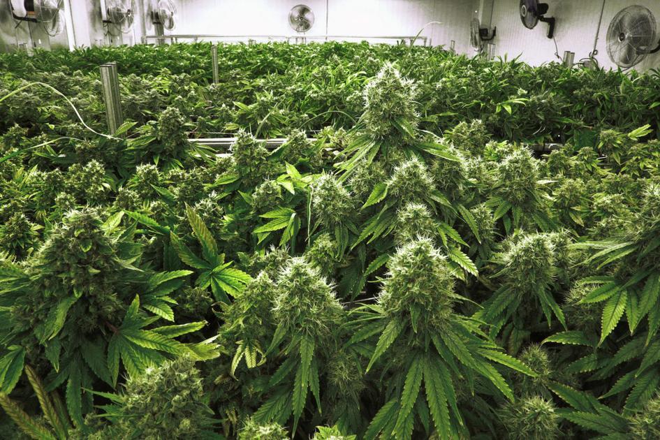 Gov. John Bel Edwards to President Trump: Don't prosecute medical marijuana