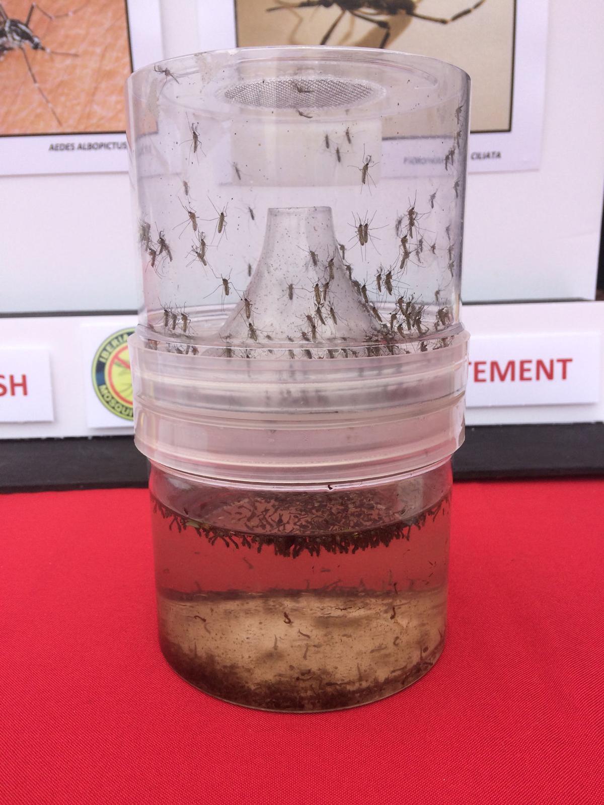 Mosquito Control_0509