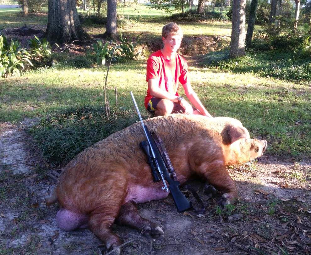 Boss hog slain by teen near Plains area home _lowres