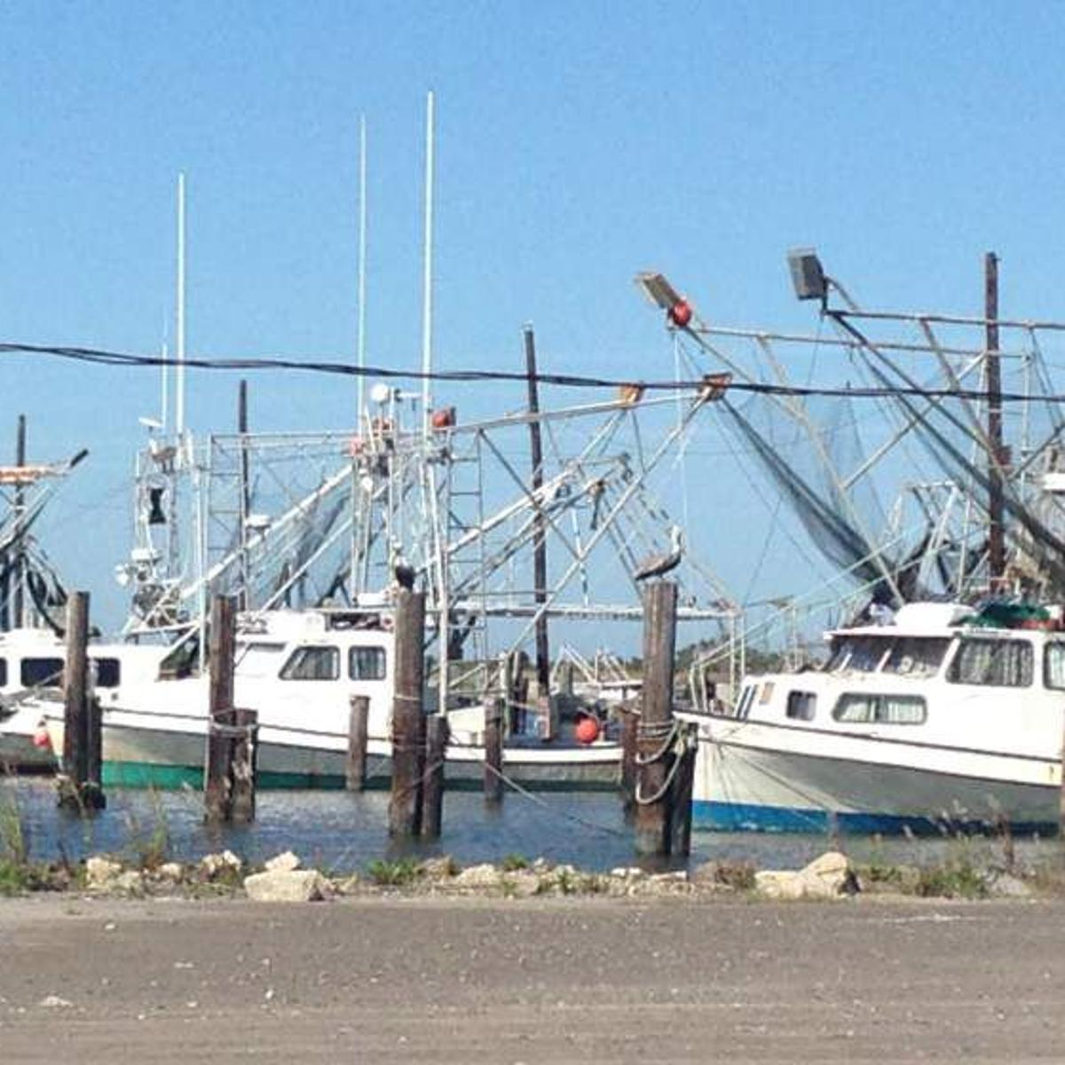 Oceana report calls on more trawls to be equipped with TEDs, and for