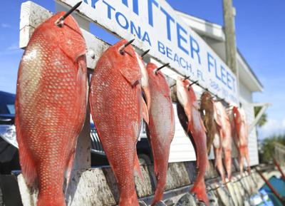 Great-Red-Snapper-Count,
