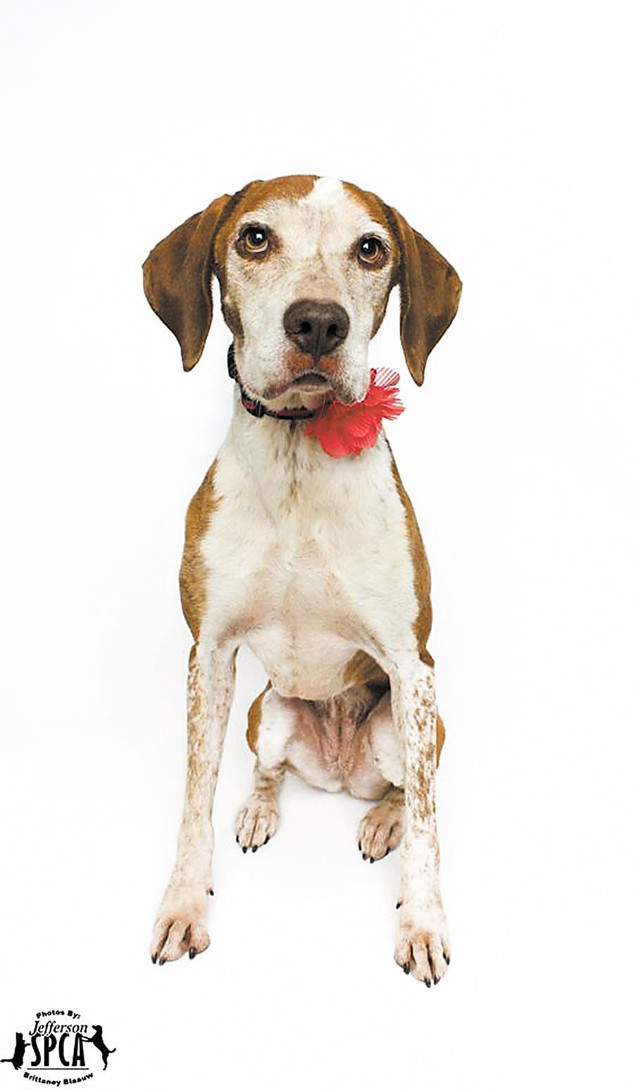 17 South Louisiana animal shelters and rescue centers where you can adopt your next pet_lowres