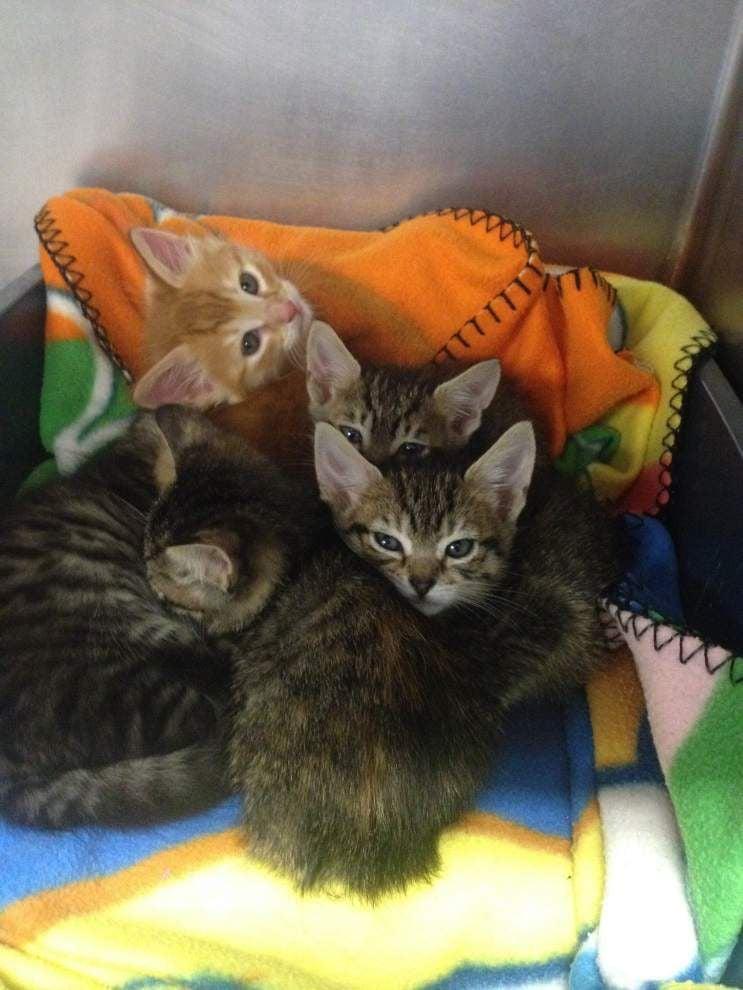 Livingston-Tangipahoa pets for May 28, 2015 _lowres