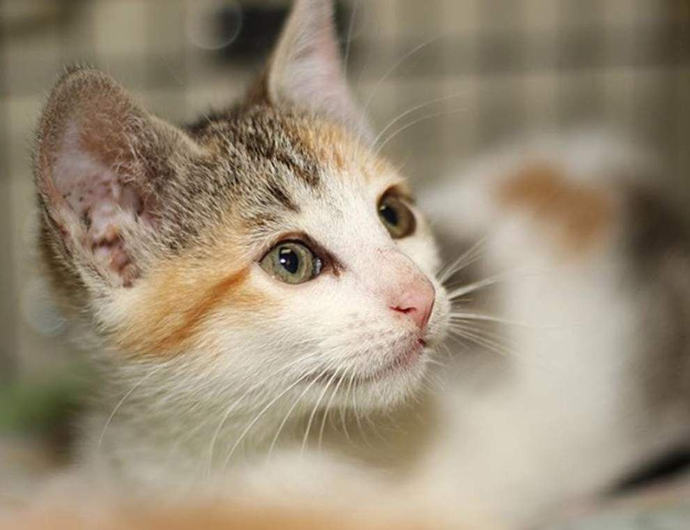 Mid City cats available for Feb. 18, 2016 _lowres