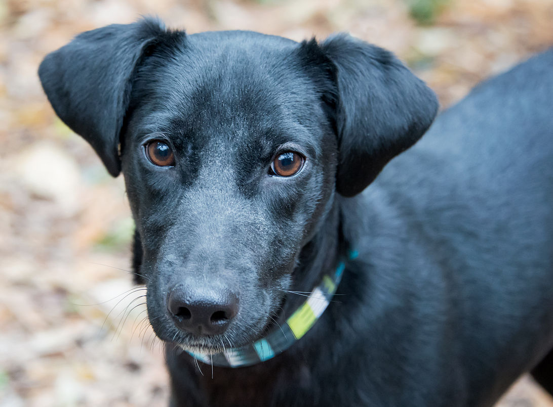 Dogs available through Friends of the Animals Baton Rouge on Feb. 15 ...