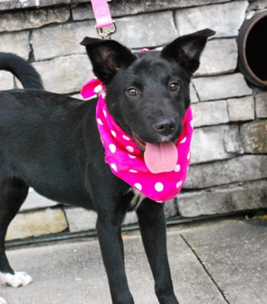Southside pets available for July 3, 2014 _lowres