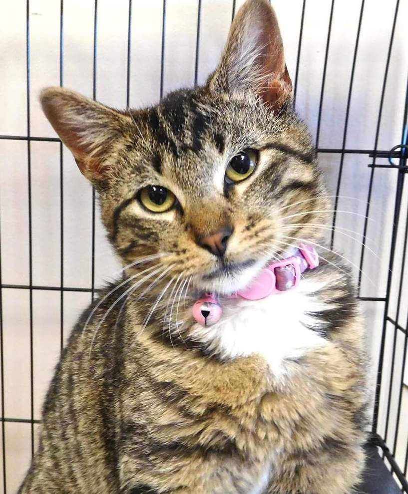 West Feliciana pets for April 14, 2016 _lowres