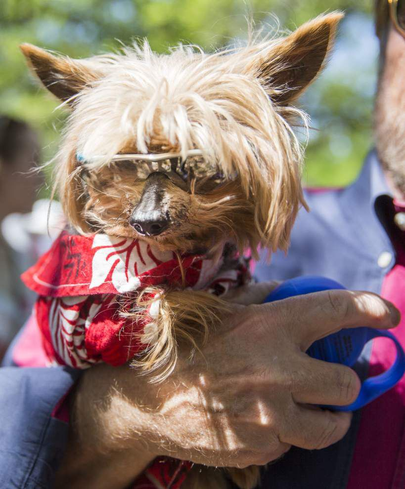 Brunch Fest raises funds for SPCA, plans return _lowres