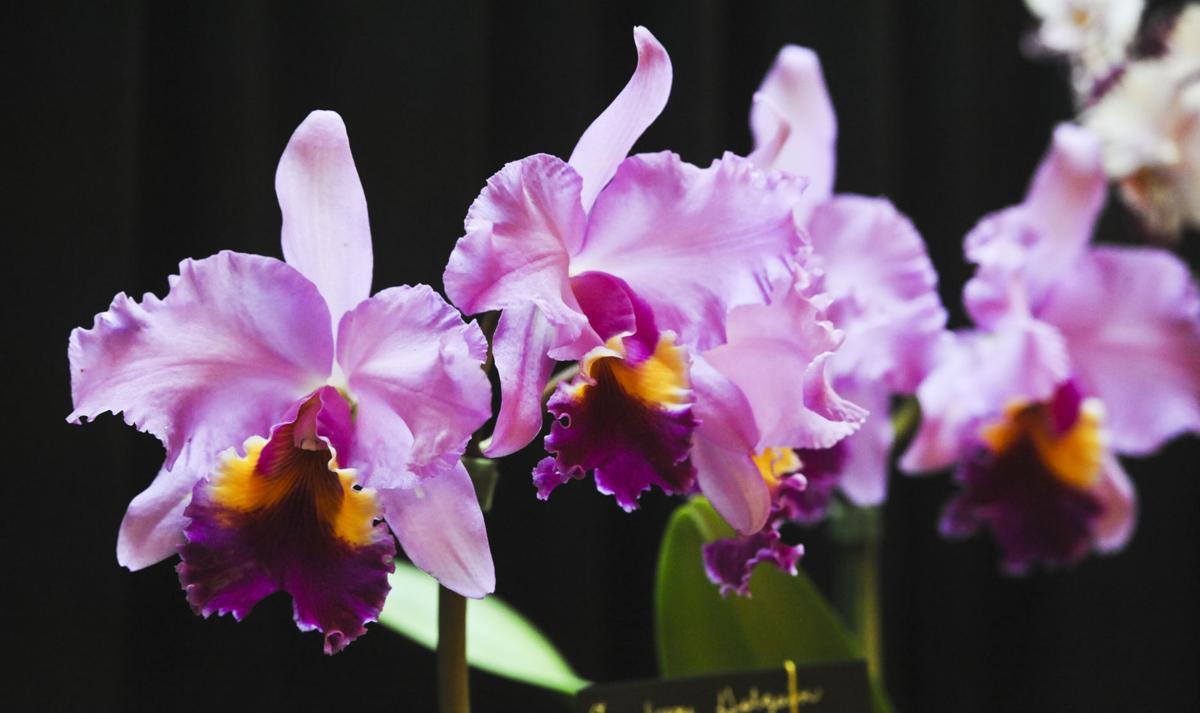 orchidshow. (copy)