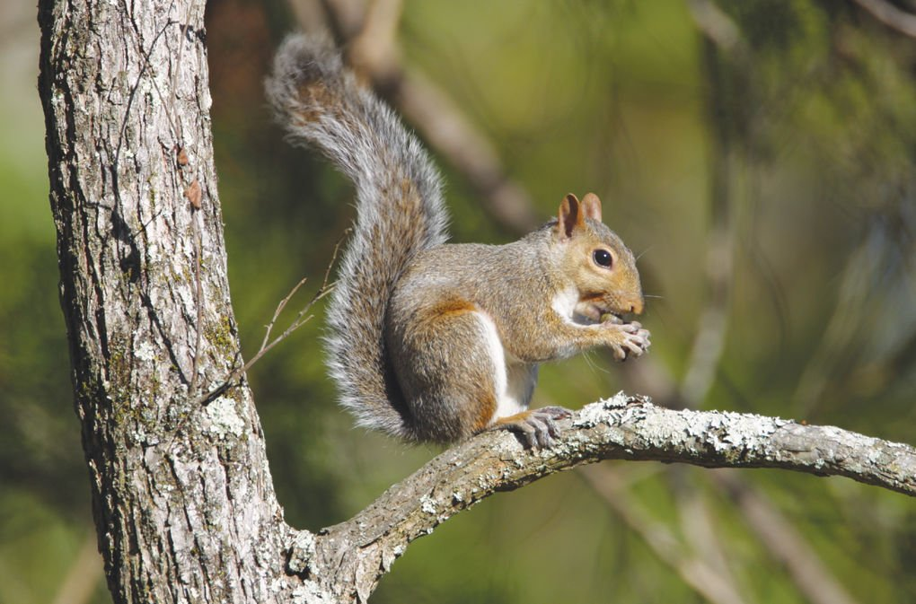 outdoors tab squirrel