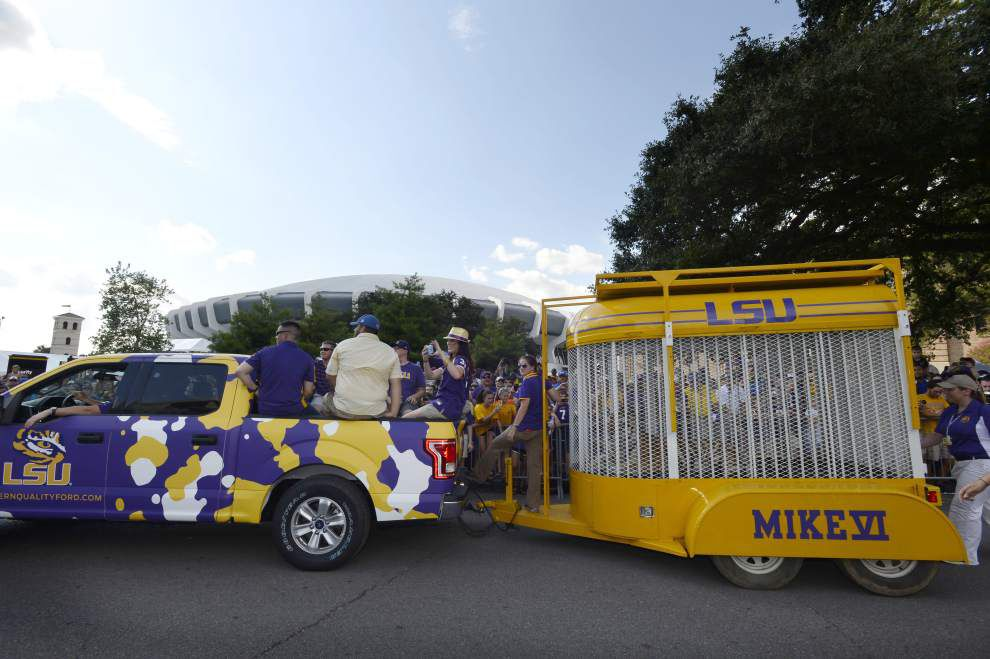 Man arrested, accused of climbing fence at Mike VI's tiger habitat on LSU campus on Saturday _lowres