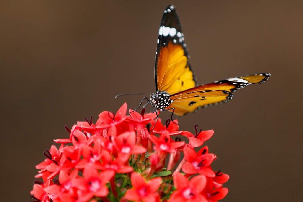 Learn garden designs that attract butterflies _lowres