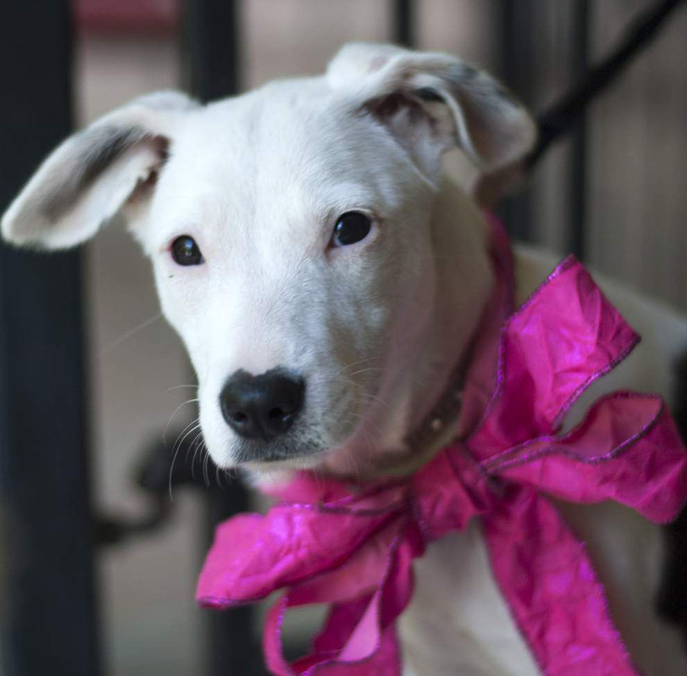 Southeast pets for May 28, 2015 _lowres