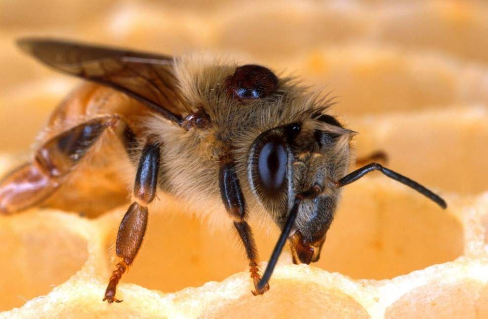 Fed survey: 23% of bee colonies died this winter _lowres