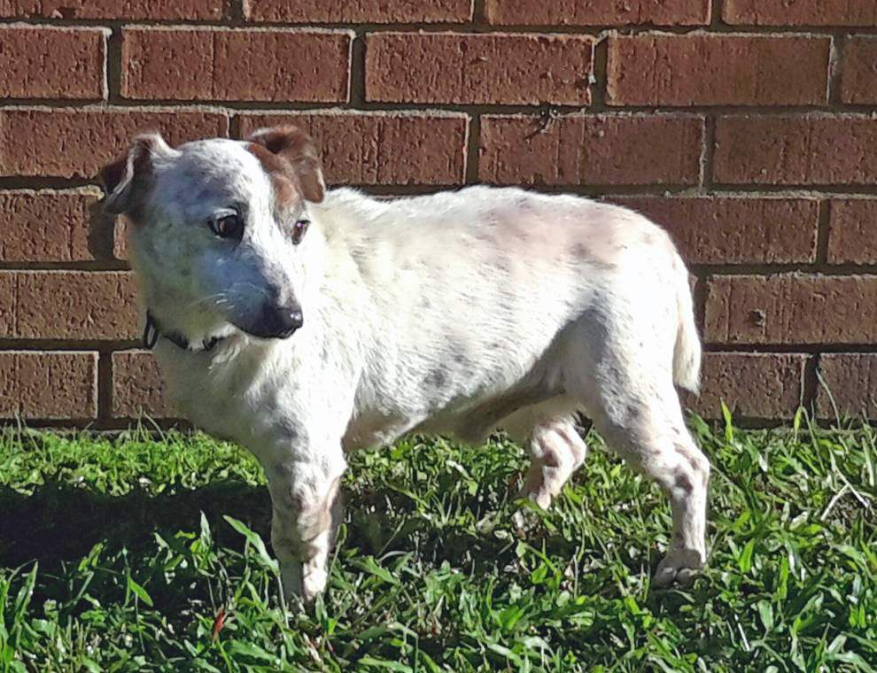 East Feliciana pets available for Dec. 10, 2015 _lowres