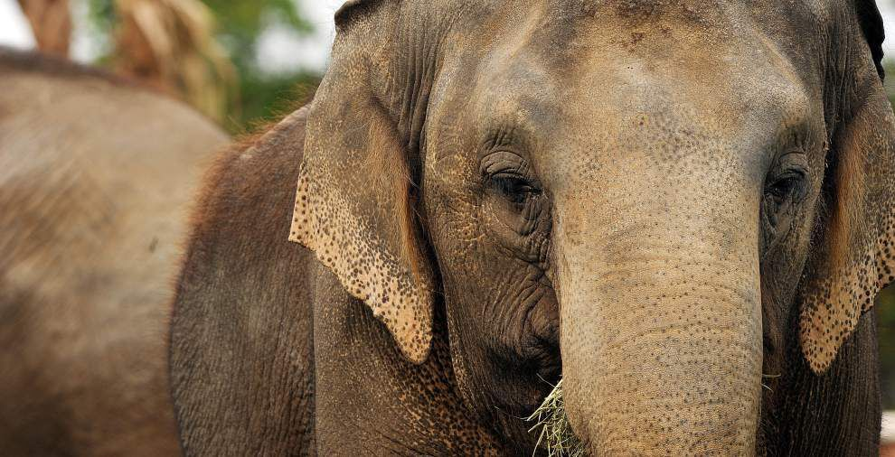 Inside look at Audubon Zoo's new 'awesome' home for elephants _lowres