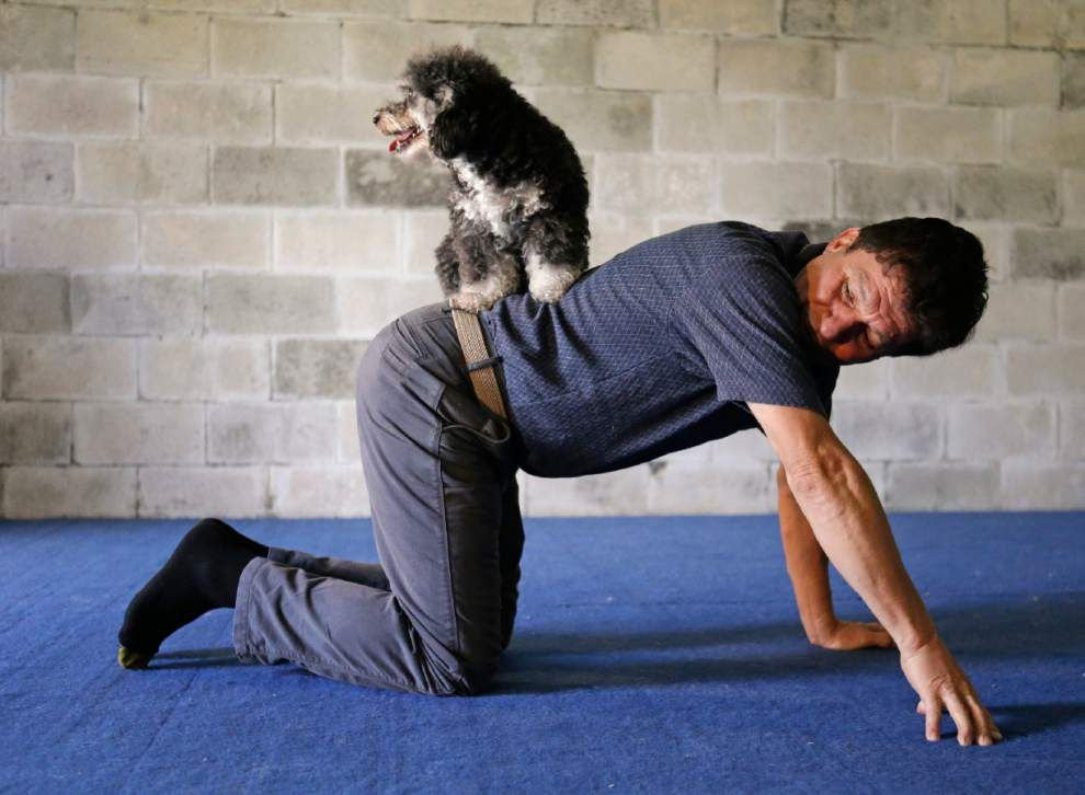 Performing dogs go big after $1 million TV prize _lowres