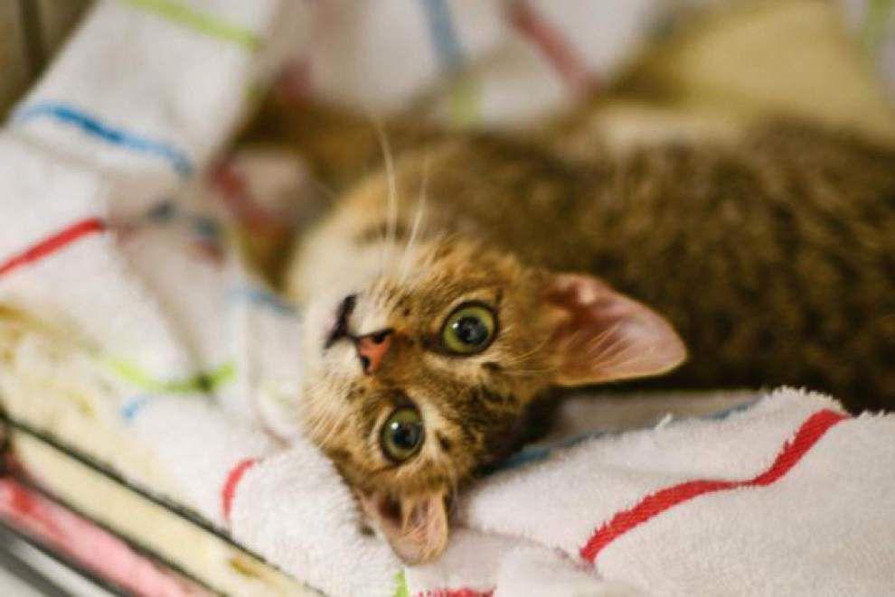 Animal Rescue: LA/SPCA launches new pet program _lowres
