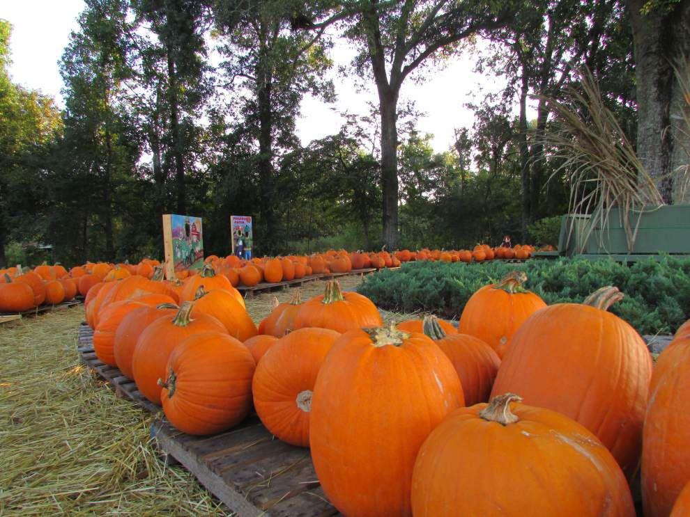 Church pumpkins help change lives _lowres
