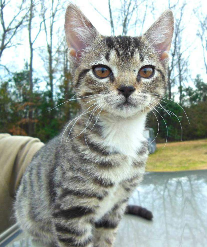 West Feliciana pets available for Feb. 5, 2015 _lowres