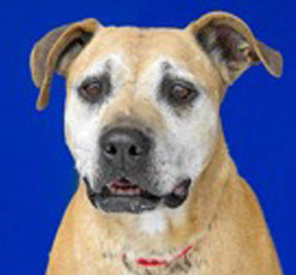 Livingston pets available for Dec. 24, 2015 _lowres