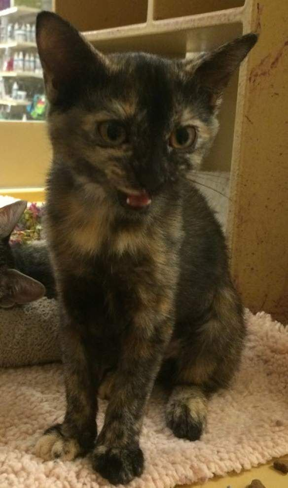 Mid City cats available for Sept. 10, 2015 _lowres