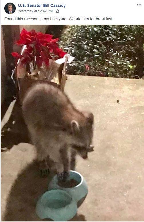 Cassidy Raccoon