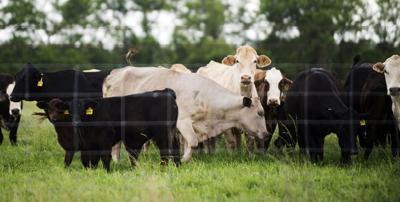 ACA.farmersfaring.020.adv (copy)